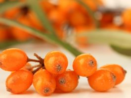 Health benefits of buckthorn berry