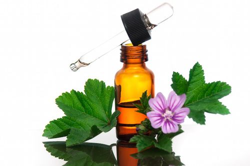 mallow essential oil