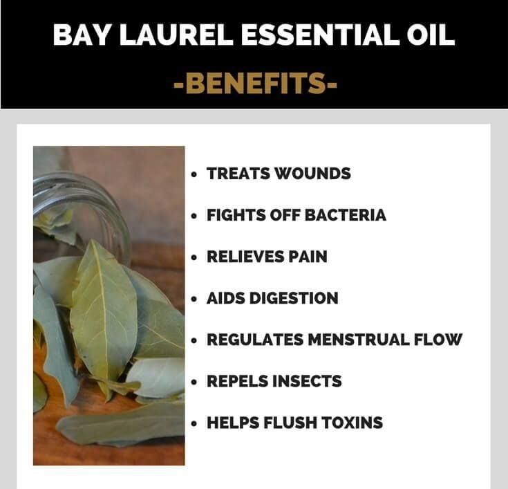 Health Benefits of Bay Laurel