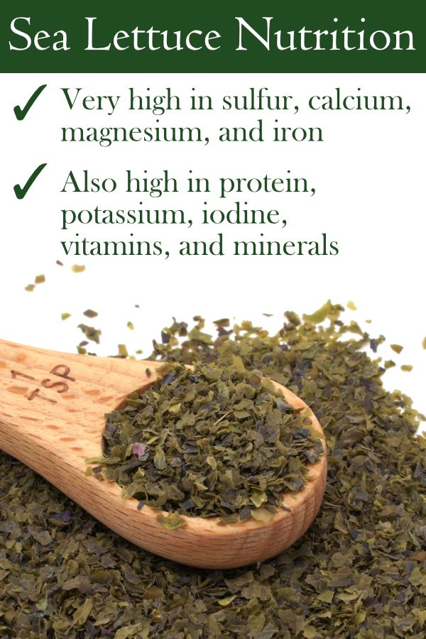 Health Benefits of Sea Lettuce