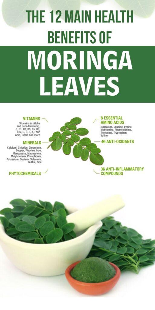 Moringa Tea: 12 Amazing Health Benefits