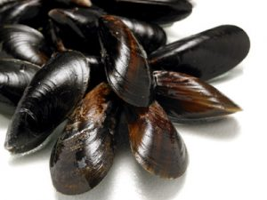 mussels heaklth benefits