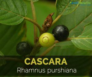 health benefits of cascara sagrada