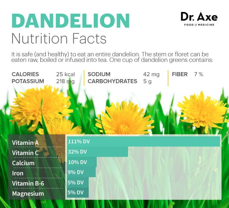 Dandelion Uses And Health Benefits