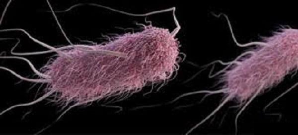 E. coli infection