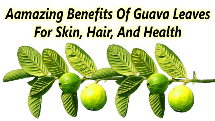 Guava leaves health benefits