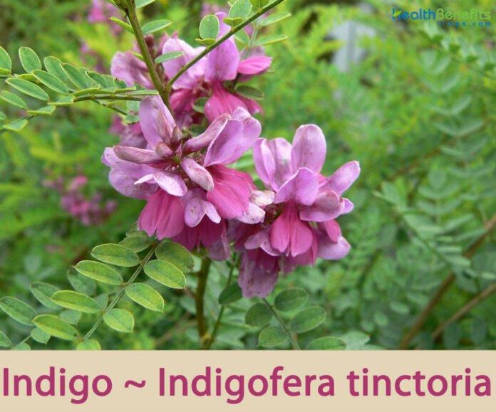 Healthy Benefits Indigo
