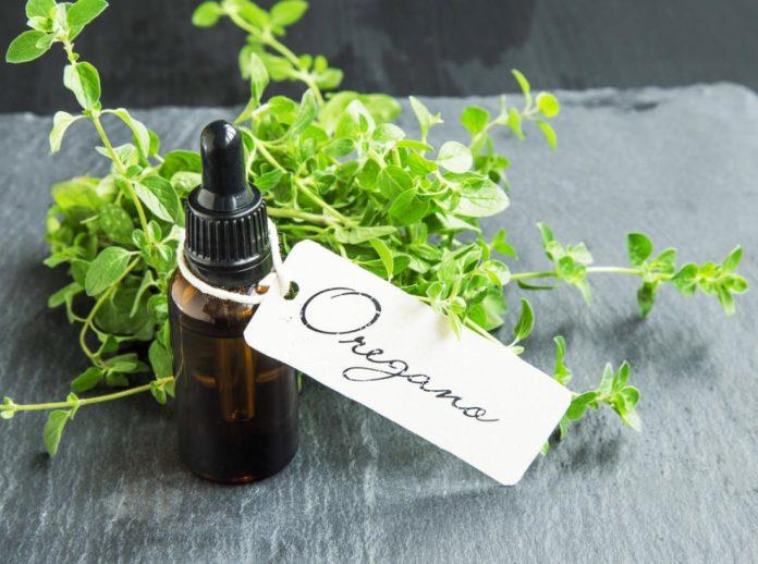 Health benefits of Ixeris chinensis