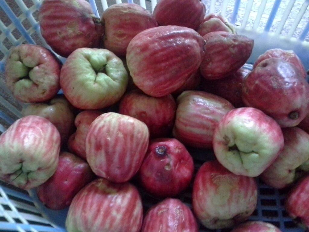 Health benefits of Malay apple