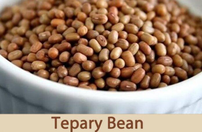 Health benefits of tepary bean