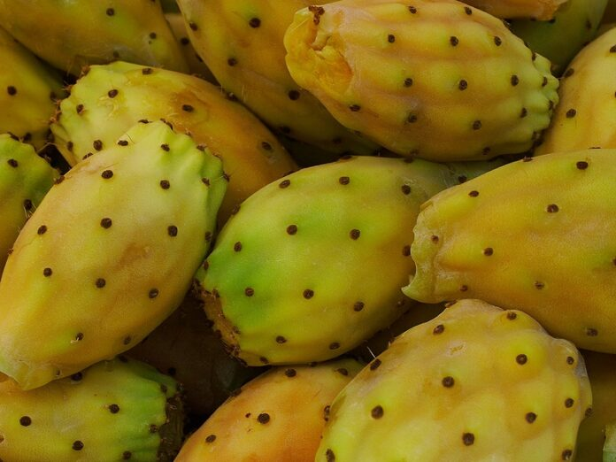 Health benefits of barbary fig