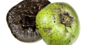 Health benefits of black sapote