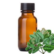 Boldo essential oil protects liver from infection and stimulates bile