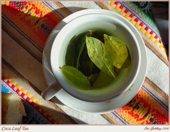 Health benefits of coca tea