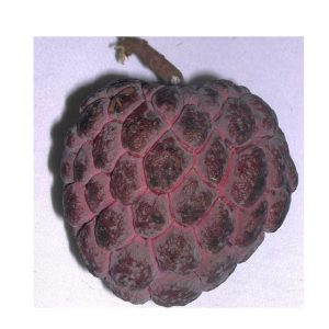 Health benefits of custard apple seeds