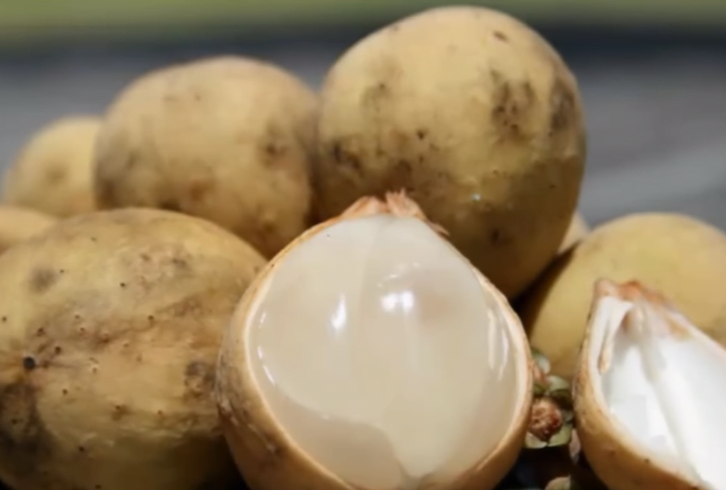 Health benefits of duku fruit