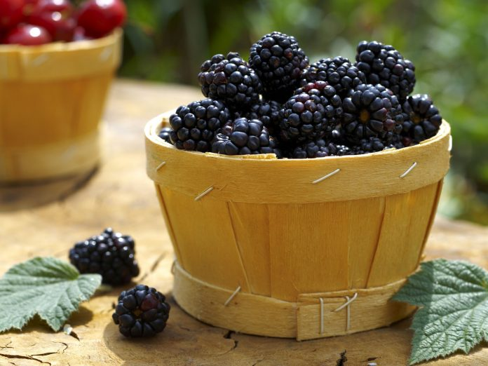 Health benefits of marionberry