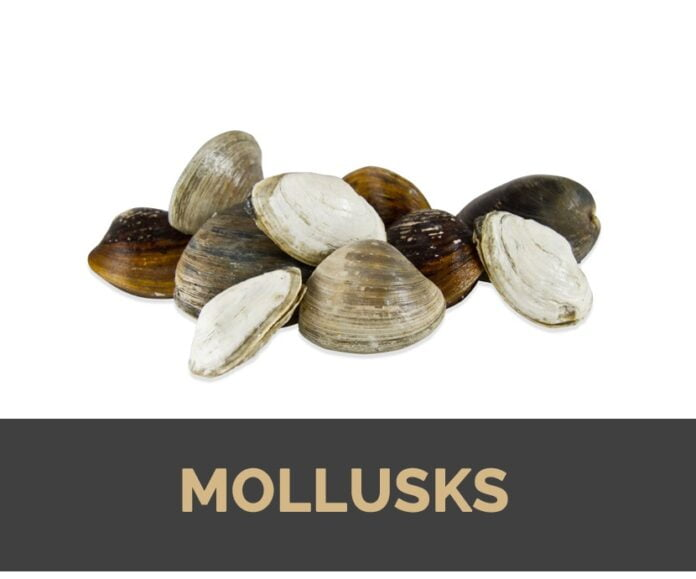 Health benefits of mollusks