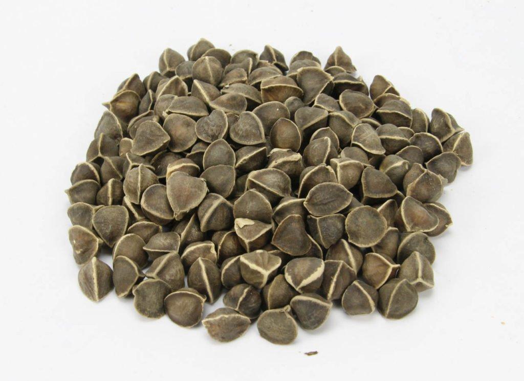 Health benefits of moringa seeds