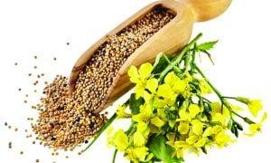 mustard oil uses