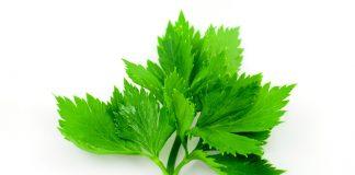 Health benefits of parsley