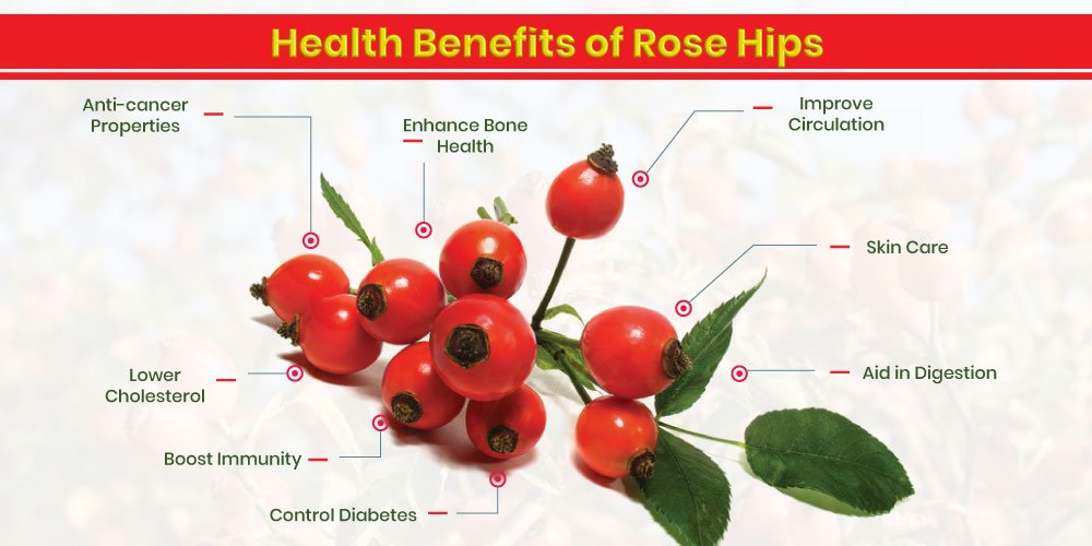 Health benefits of rose hip