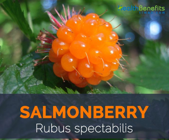 Health benefits of salmonberry