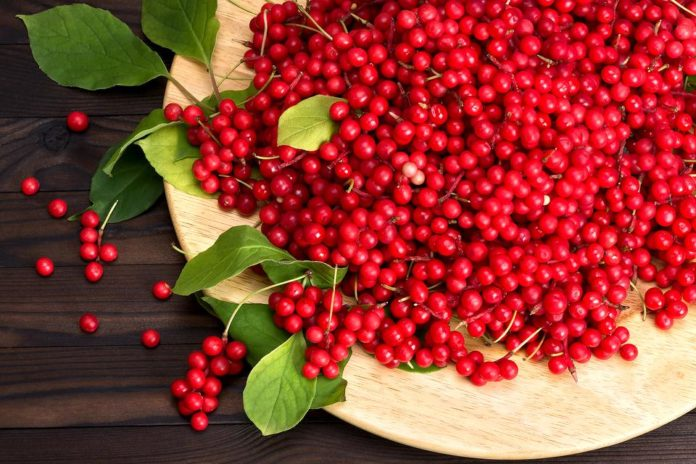 Health benefits of schisandra berry