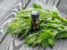 Health benefits of wormwood essential oil