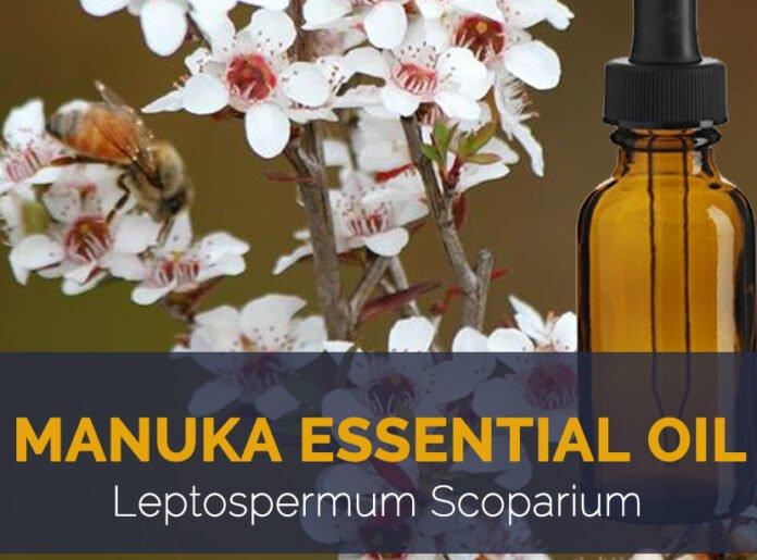 Health benefits of manuka essential oil