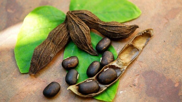 Health Benefits of Velvet Bean