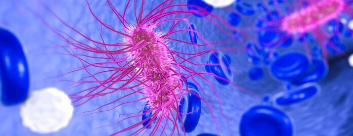 Natural cures for E. coli infection