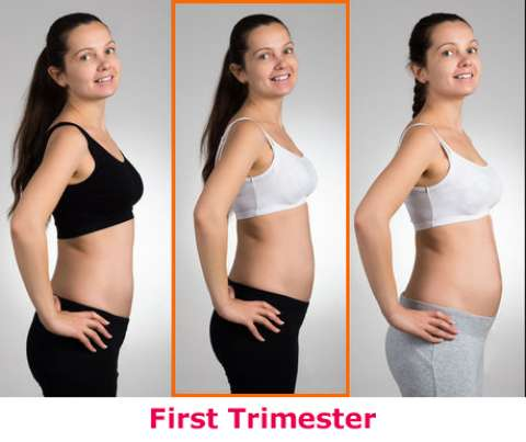 Second Month of Pregnancy