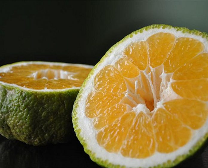 ugli fruit benefits and nutrition
