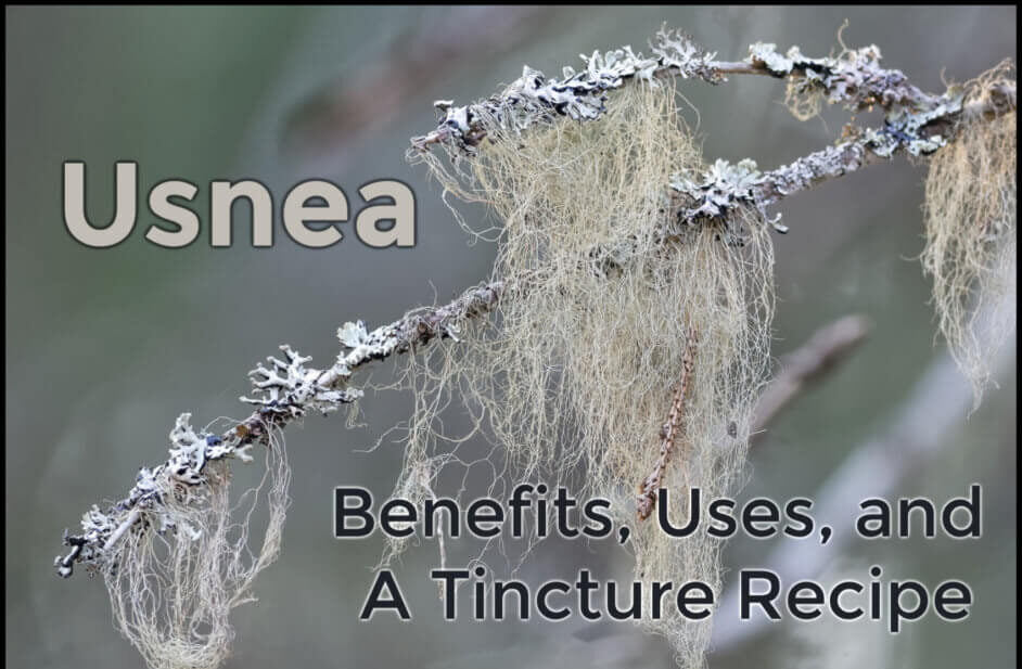 Health Benefits of Usnea