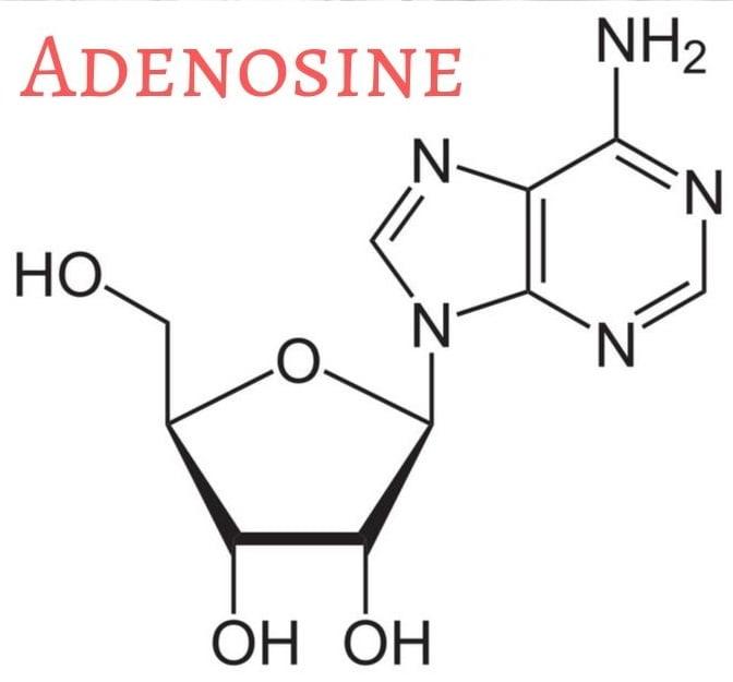 adenosine monophosphate benefits