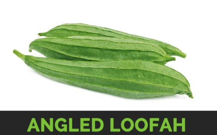 angled loofah plant uses