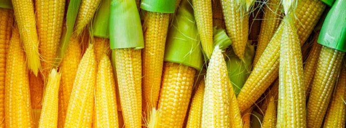 baby corn carbs keto