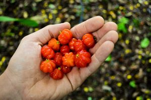Health benefits of Surinam cherries