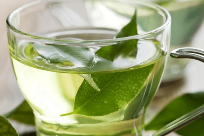 Boldo Tea: Best 4 Health Benefits