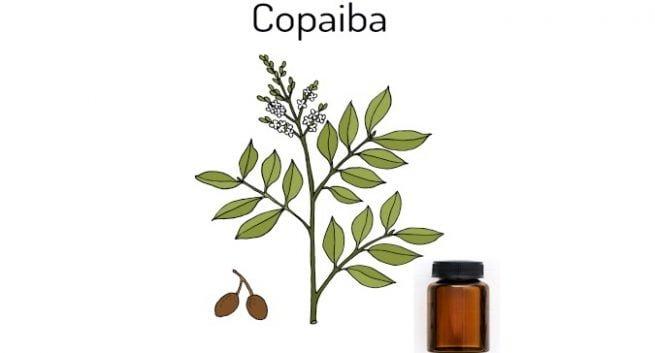 Health benefits of copaiba oil