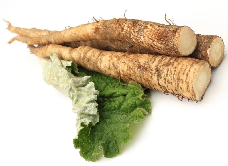 burdock root benefits for hair