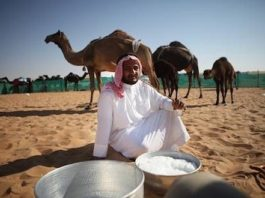 camel milk health benefits