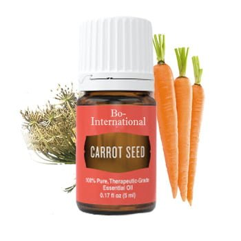 carrot seed essential oil health benefits