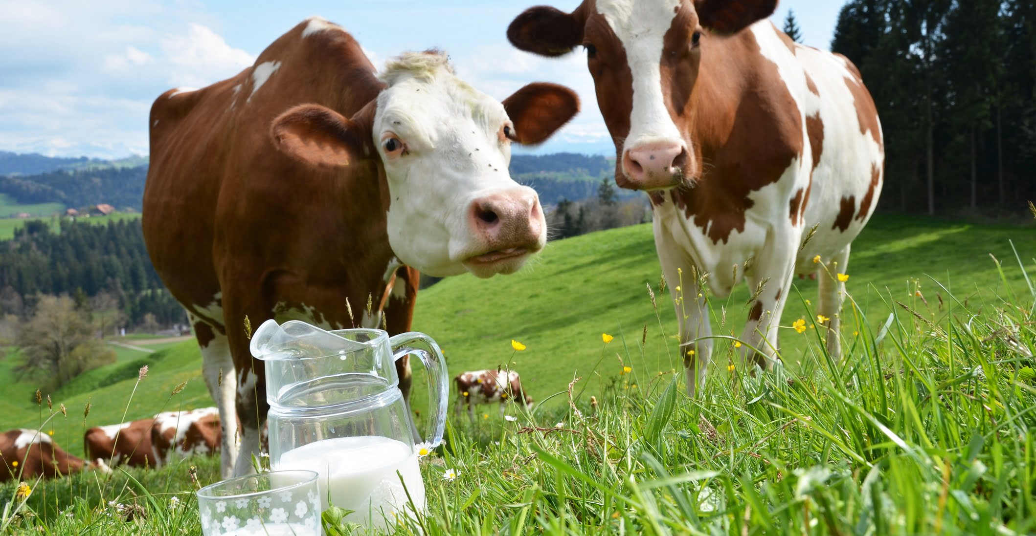 health benefits of cow milk home remedy and natural cures