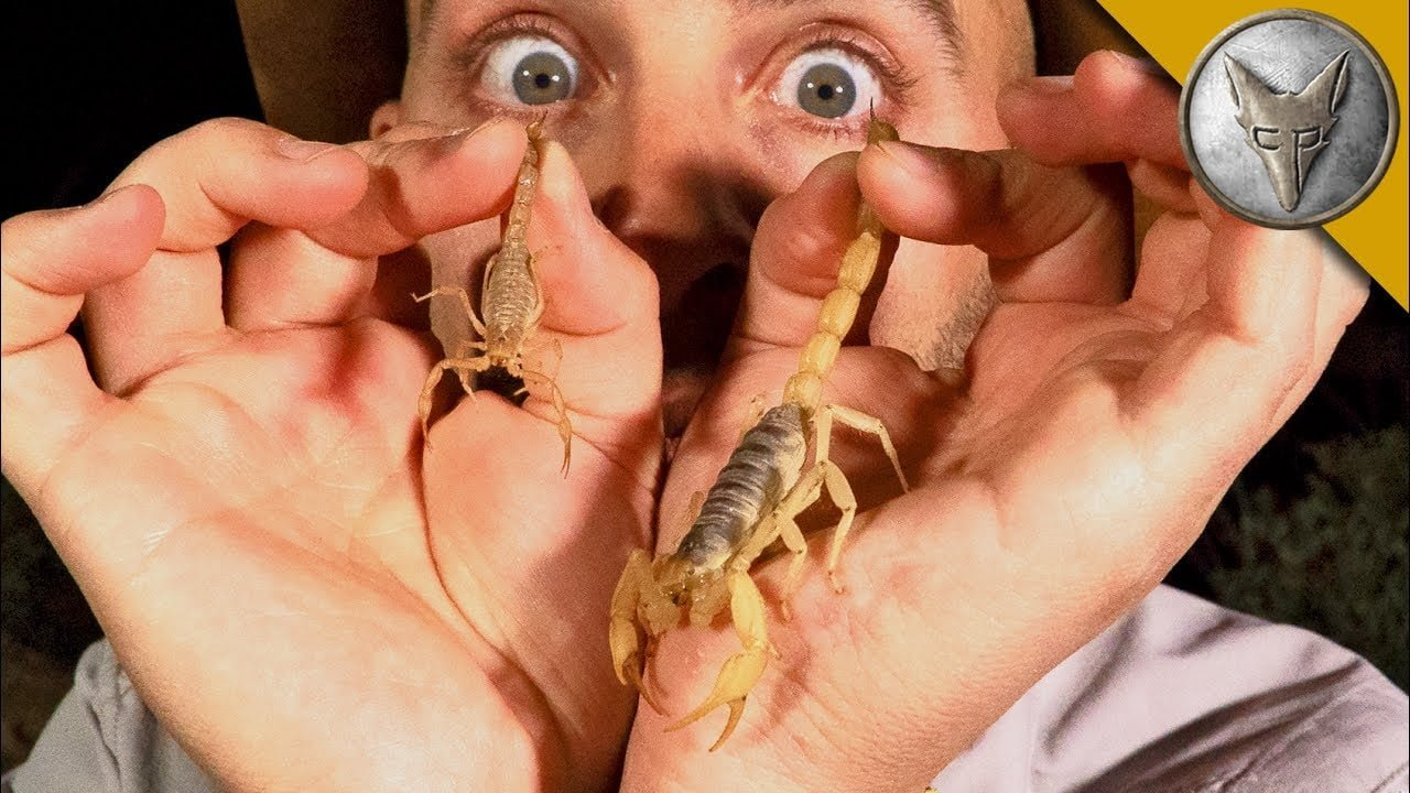 Natural cures for scorpion bite