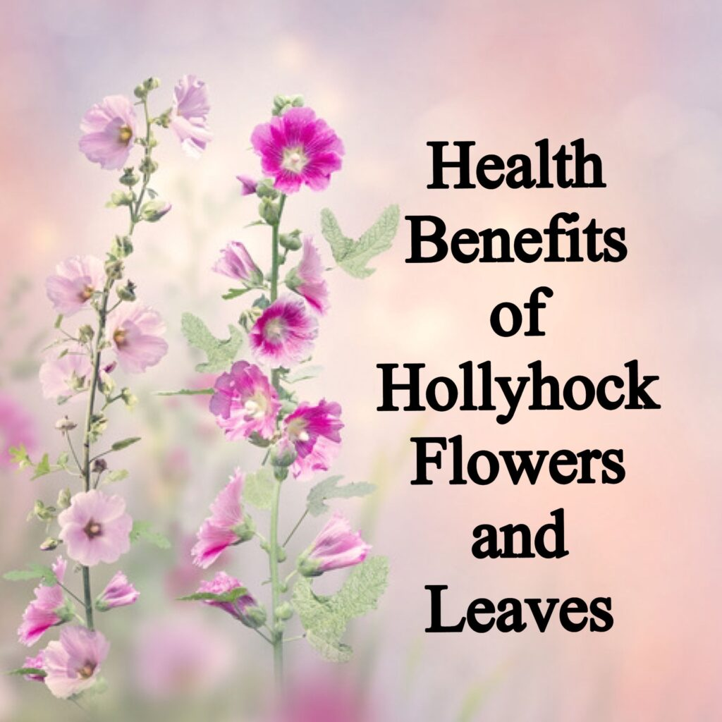 health benefits of hollyhock