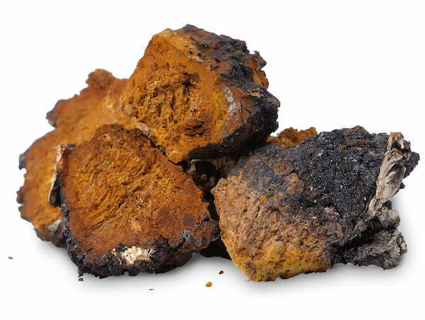 Health Benefits Of Chaga Mushroom