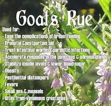 Health benefits of goat's rue