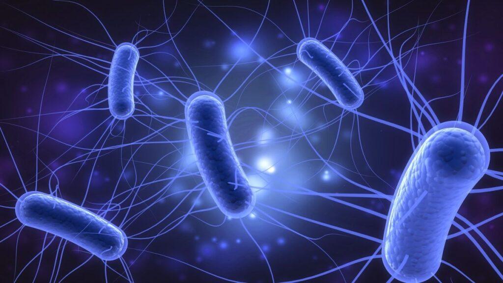 e coli infection in urine